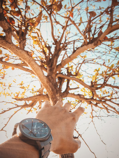 Hand holding tree by plants