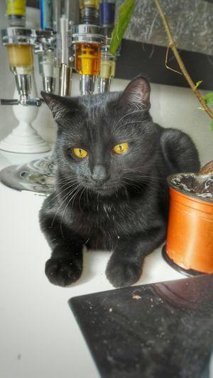 Cats Cat BLackCat Catsagram