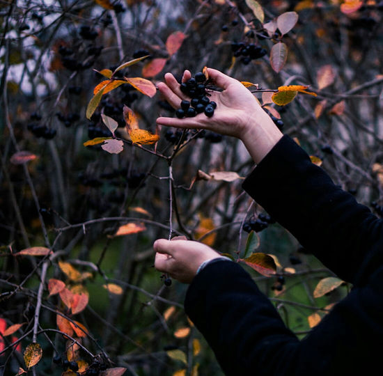 Autumn One Person Vertical Person Outdoors Food And Drink Food Chokeberries Berries Close-up Day Nature Check This Out Love Nature Taking Photos Lifestyles Photography Beauty In Nature Love Leaf