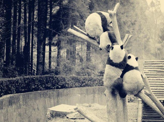 Animal Gray Banda Love ♥ Friends ❤ Natural Beauty Photo Photography Smile