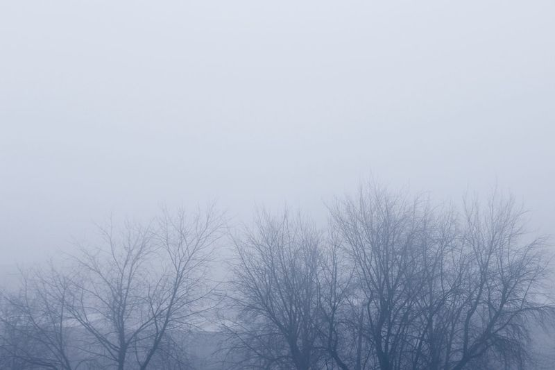 Mistyfoggymilkymoody Fog Foggy Morning Tree Bare Tree Sky Plant No People Nature Tranquility Winter Clear Sky Branch Cold Temperature Tranquil Scene