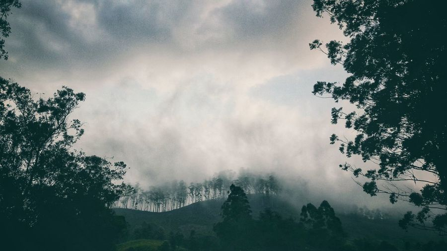 Low angle view of trees against cloudy sky in forest during foggy weather