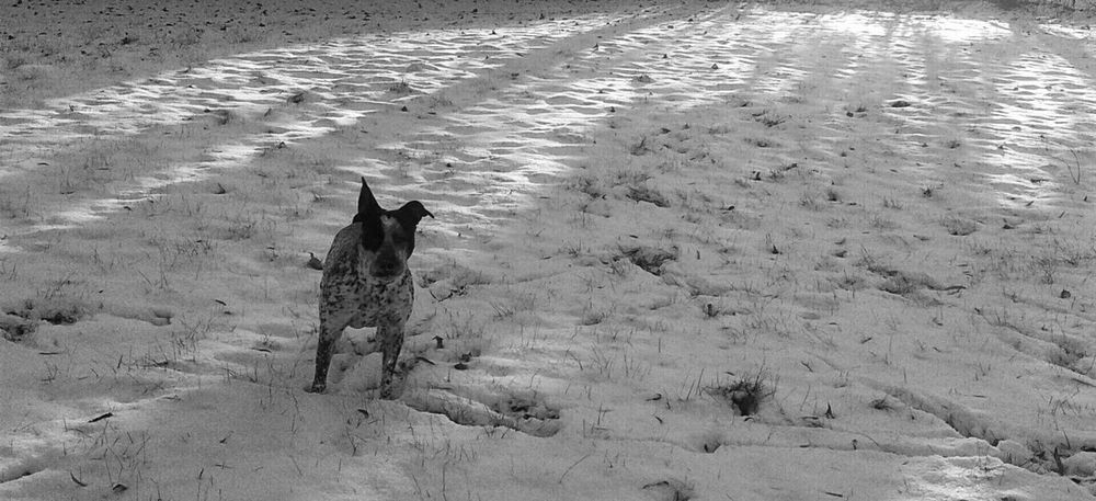 Perspective Rule Of Thirds High Contrast Light Black And White Black And White Photography Natural Beautiful Nature The Shadows Dog Puppy Fast Action Snapshot One Second Action Capturing Movement Fast Movement My Winter Favorites It's Cold Outside Learn & Shoot: Working To A Brief Photography In Motion Nature's Diversities BYOPaper! Pet Portraits