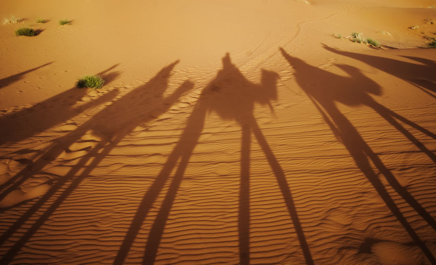 High angle view of shadow on sand at sunset
