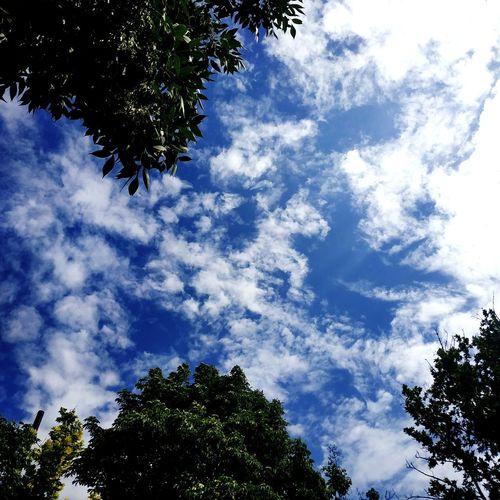 Давно меня тут не было однако... Tree Blue Branch Silhouette Sky Cloud - Sky Sky Only