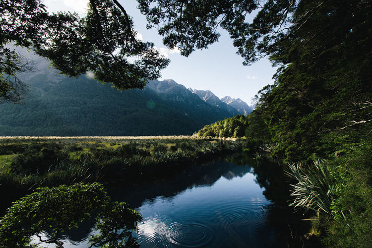 New Zealand. New Zealand New Zealand Scenery Tree Water Mountain Forest Lake Pinaceae Reflection Pine Tree Sky Mountain Range Reflection Lake Reflecting Pool Valley Lush Foliage Greenery Standing Water Mountain Peak The Great Outdoors - 2018 EyeEm Awards