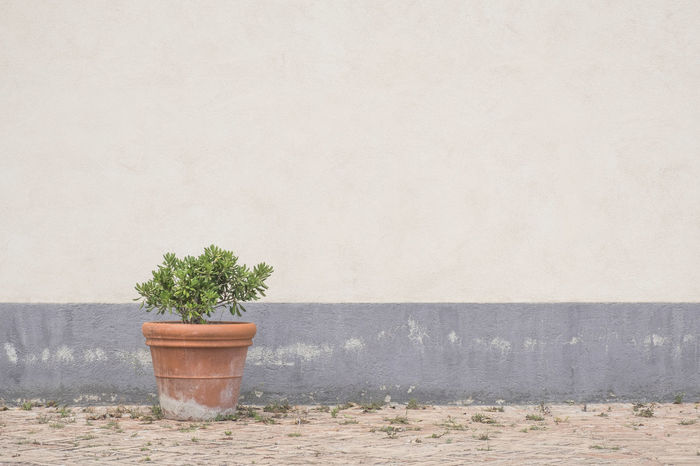 Architecture Built Structure Copy Space Day Growth Mediterranean Culture Nature No People Outdoors Plant Potted Plant Striped Terracotta Wall Wall - Building Feature