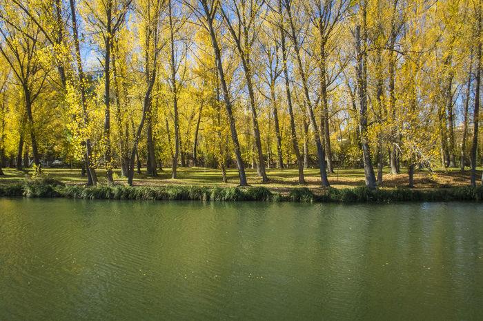 Autumn Autumn Colors Castilla Castilla Y León Duero River Riverside SPAIN Soria Trees Beauty In Nature Castillayleon Day Duero Nature Outdoors River Tree EyeEmNewHere