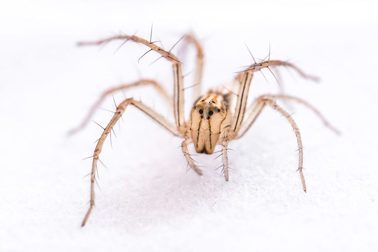 Close-Up Of Spider On White Surface