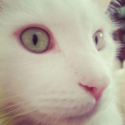 Animals Cat Kedi Uğur