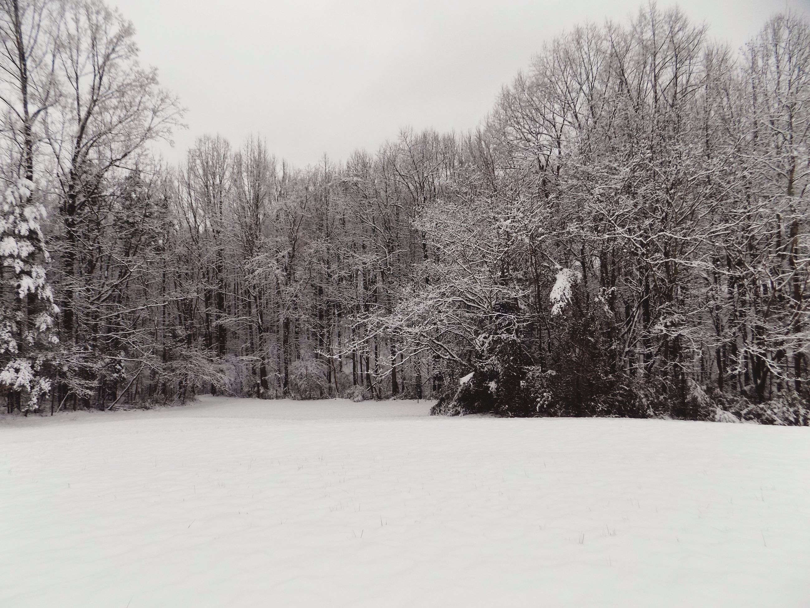 tree, snow, winter, cold temperature, tranquility, tranquil scene, beauty in nature, nature, scenics, season, landscape, growth, bare tree, forest, branch, clear sky, non-urban scene, sky, weather, white color