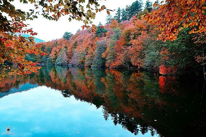 Photo by Esat Çekiç Yedigoller Autumn Colors Autumn Leaves Sonbahar Populer Photos Nature Landscape