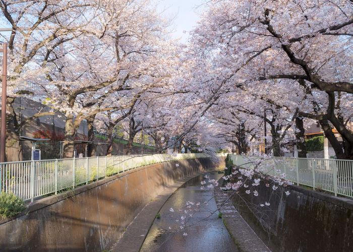 River Hanami