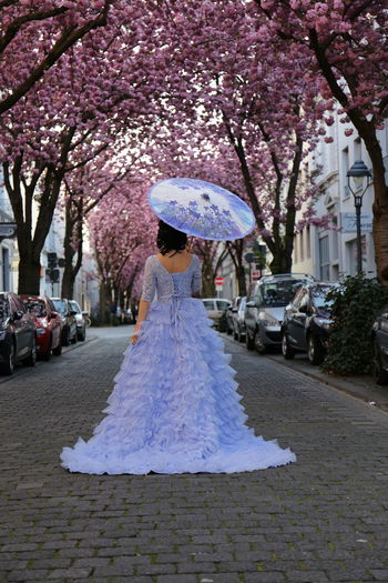 View of cherry blossom on street in rain