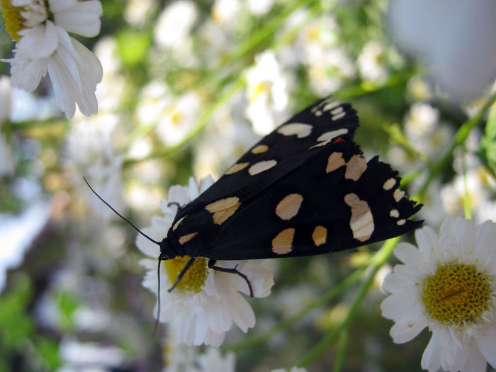 Nature Upclose