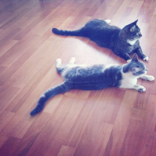 Cats Cat Lovers Hi! Cute Pets Pet Love