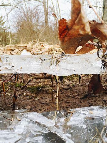 How Do We Build The World? Ice Driedup