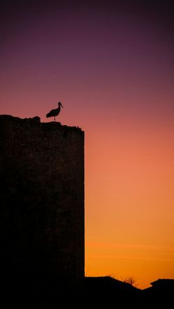 Silhouette Sunset Outdoors Red One Animal Full Length Animal Wildlife Sky No People Scenics Nature Architecture Animal Themes Night Bird Malephotographerofthemonth EyeEm Gallery Check This Out Cigueña Pedraza Stork Stork Nest EyeEmNewHere Neon Life Perspectives On Nature Colour Your Horizn The Creative - 2018 EyeEm Awards