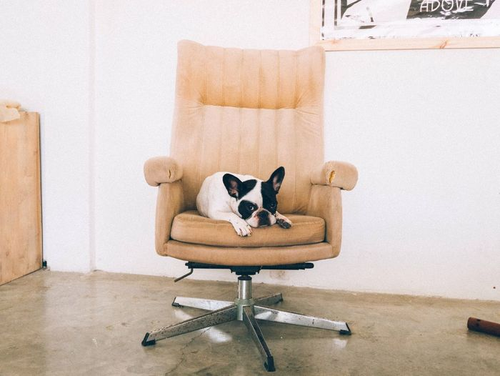 The airbnb apartment also included this high quality Dog French Bulldog Relaxing