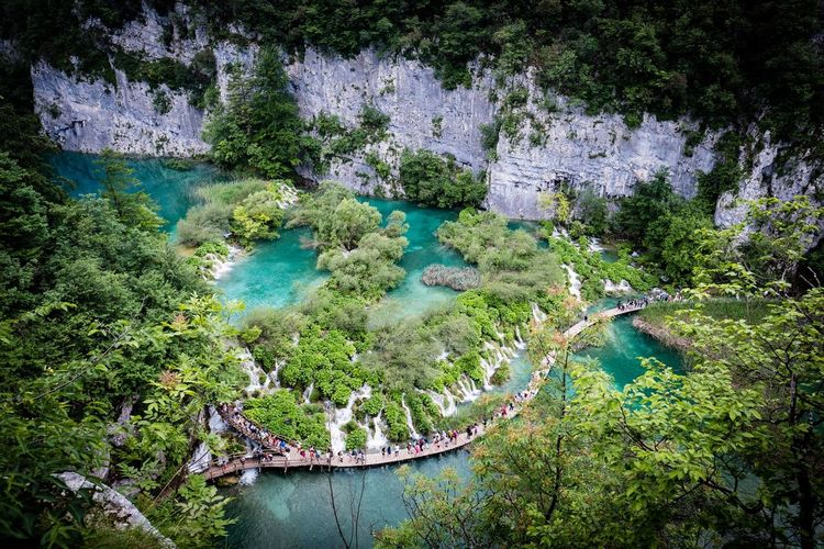 Plitwitz lake Plitvice National Park Water Plant Growth Nature Tree Day Beauty In Nature Outdoors Scenics - Nature