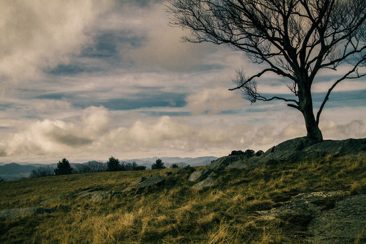 Scenic view of tree on mountain landscape against sky
