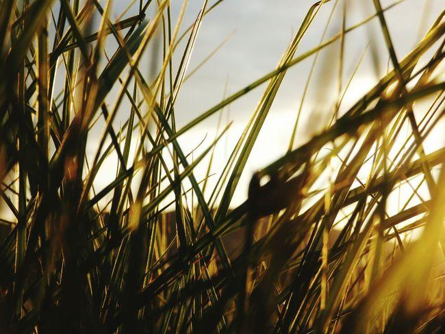 Peace And Quiet Bliss Sunset Newtownards Grass