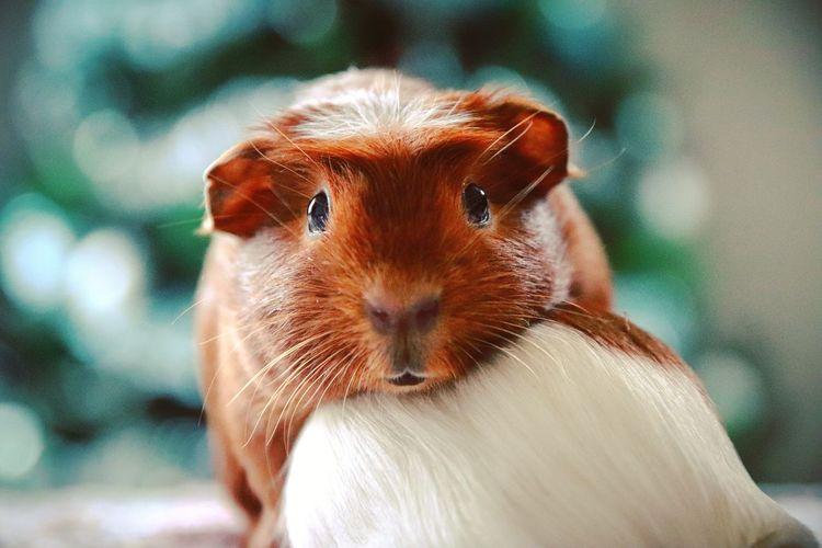 Eyem Gallery Eyem Best Shots EyeEm Selects Pets Portrait Looking At Camera Close-up Rodent Hamster Chipmunk Rat Mouse Hedgehog Owl