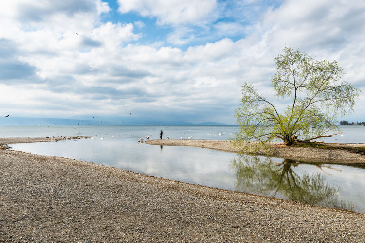 Lausanne Vidy Beach Beauty In Nature Birds Cloud - Sky Clouds Clouds And Sky Lake Lakeshore Nature Nature Outdoors Pebbles Person Reflection Reflections In The Water Scenics Shallow Water Sky Sky And Clouds Tree Tree Water The Great Outdoors - 2017 EyeEm Awards