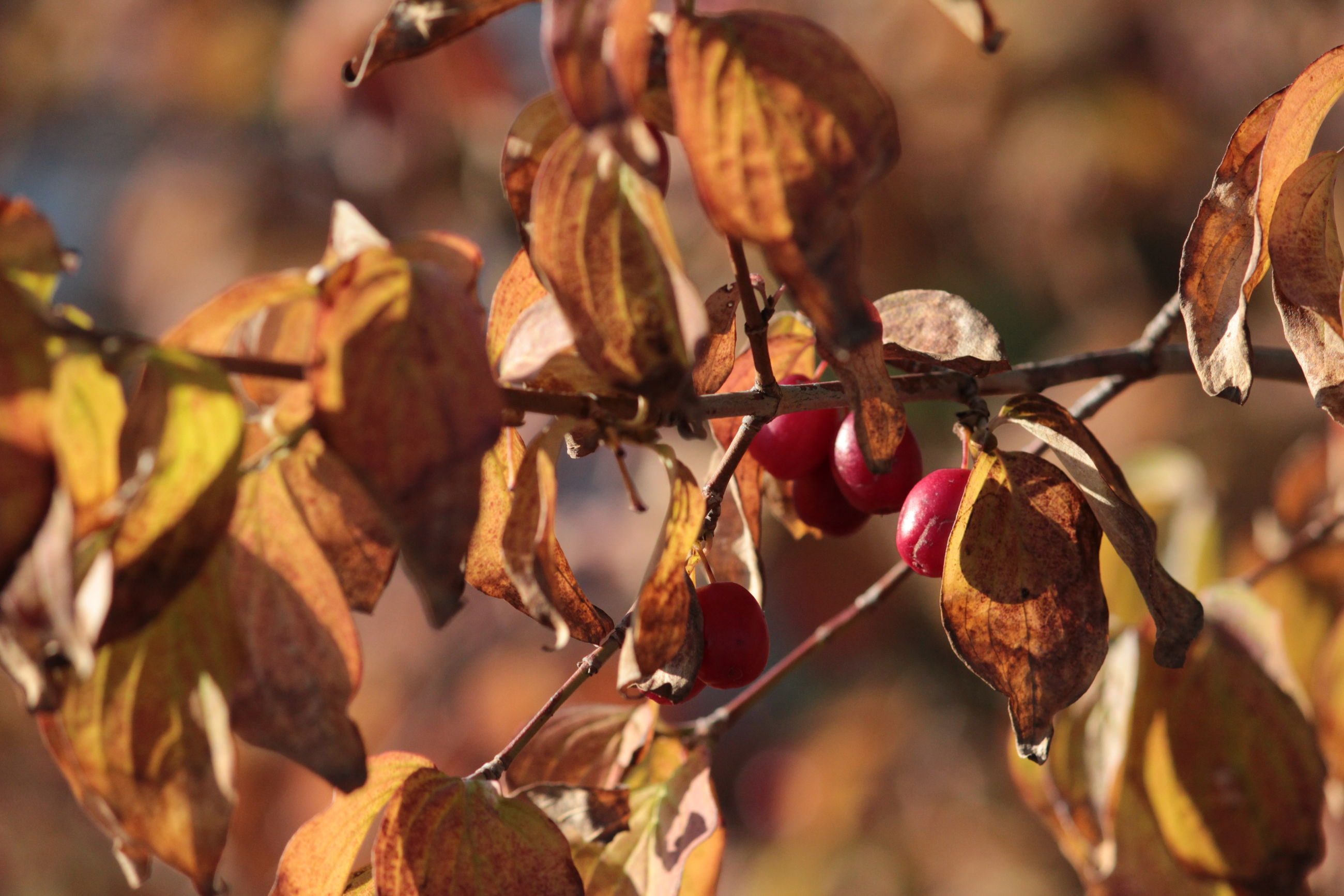 leaf, plant part, close-up, focus on foreground, plant, autumn, growth, fruit, no people, tree, nature, day, food, branch, beauty in nature, change, food and drink, healthy eating, outdoors, twig, leaves, natural condition