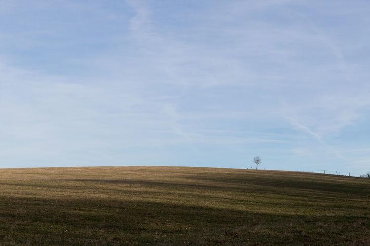 lonely tree on top of the hill Plant Nature Day Outdoors Cold Temperature Field Land Landscape Sky Environment Tranquil Scene Tranquility Horizon Over Land Horizon Scenics - Nature Beauty In Nature Agriculture Rural Scene Cloud - Sky Grass Non-urban Scene Tree