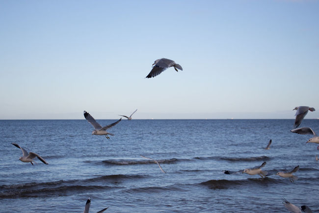 Bird Flying Sea Scenics Christmas Christmas Around The World Baltic Coast Baltic Sea Baltic Sea Winter Nature Wave Seagulls Flying Seagull And Sky Seagulls In Flight Seagulls And Sea Beach Morning EyeEm Best Shots The Great Outdoors - 2017 EyeEm Awards Been There.