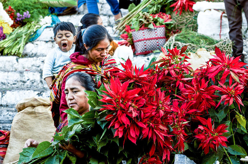 High angle view of people on red flowering plants