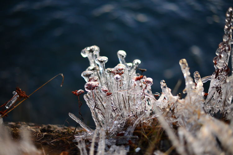 Water Nature Plant No People Day Selective Focus Close-up Growth Fragility Outdoors Beauty In Nature Vulnerability  Focus On Foreground Flower Tranquility Cold Temperature Pollution Mushroom Cold Winter Ice Miracle Fantasy Flowering Plant