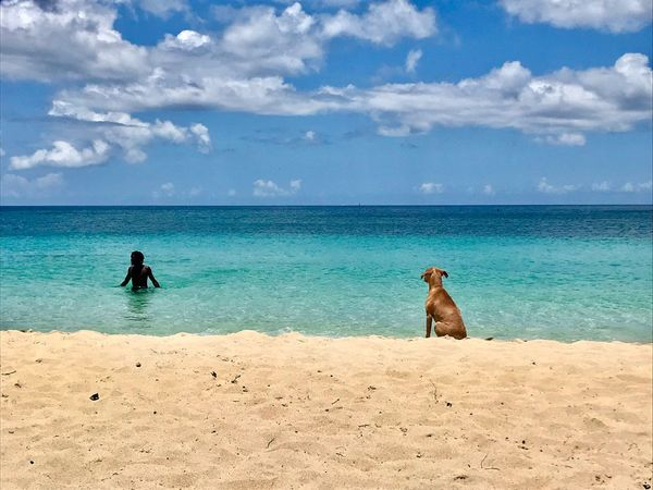 Pup waiting patiently for his human to get out of the Caribbean Sea Caribbean Sea Caribbean Life Lone Swimmer Dog On The Beach Fluffy Clouds And Sea Swimming Water Sea Beach Land Sky Cloud - Sky Beauty In Nature Sand Dog Horizon Over Water