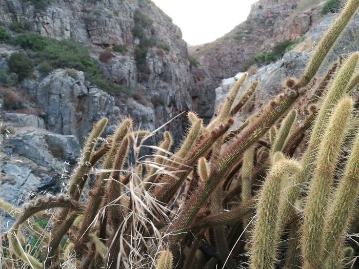 Nature Rock Formation Rock - Object Beauty In Nature Day Outdoors Tranquility No People Mountain Plant Landscape Desert