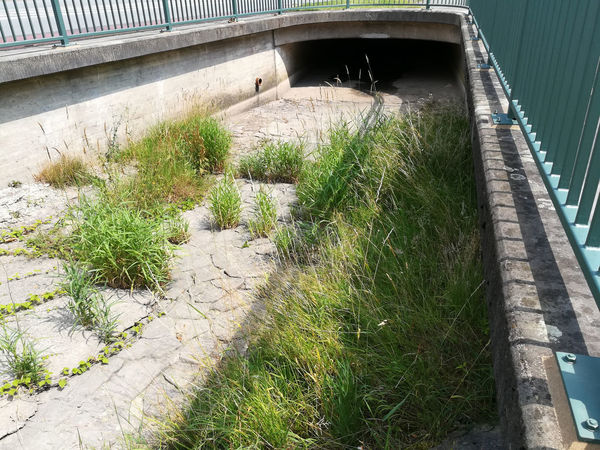 Architecture Ausgetrocknet Brigde Brücke Building Exterior Built Structure Day Fluss Flussbett Friedenseiche Grass Growth Horn-Bad Meinberg Nature No People Outdoors Plant Wiembecke Zangenbach