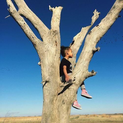 Girl Power Bleached Wood Girl In Tree Birds In Flight Nature