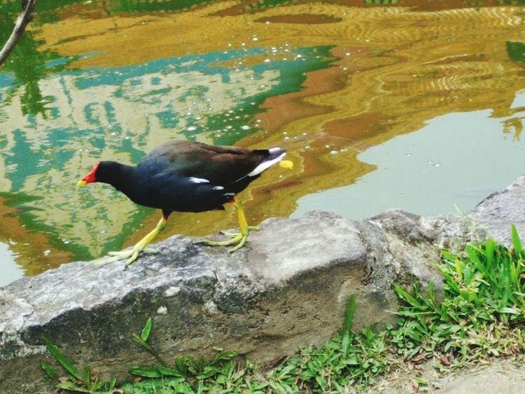 Bird Bird Photography Bird Watching Bird Hunting