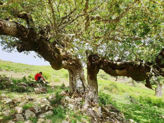 Acer monspessulanum Tree Men Field The Great Outdoors - 2018 EyeEm Awards