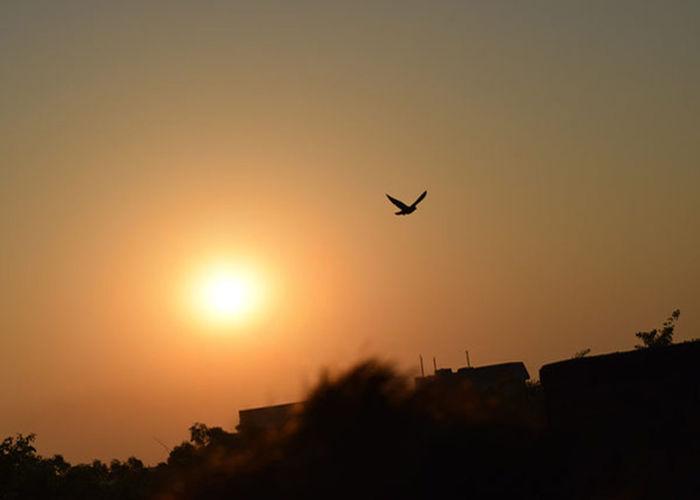 Flying Sunset Bird Sky Nature No People Energy Motivation Sun Warm