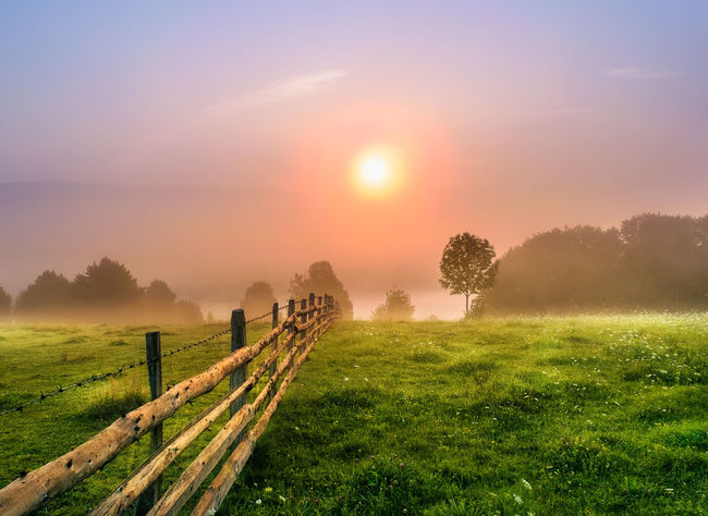 Agriculture Beauty In Nature Day Farm Field Fog Grass Landscape Nature No People Outdoors Rural Scene Scenics Sky Sun Sunlight Sunset Tranquil Scene Tranquility Tree