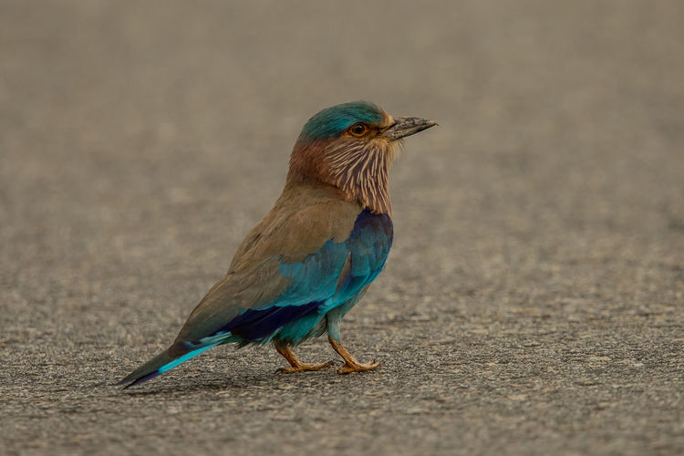 Close-up of bird perching on road