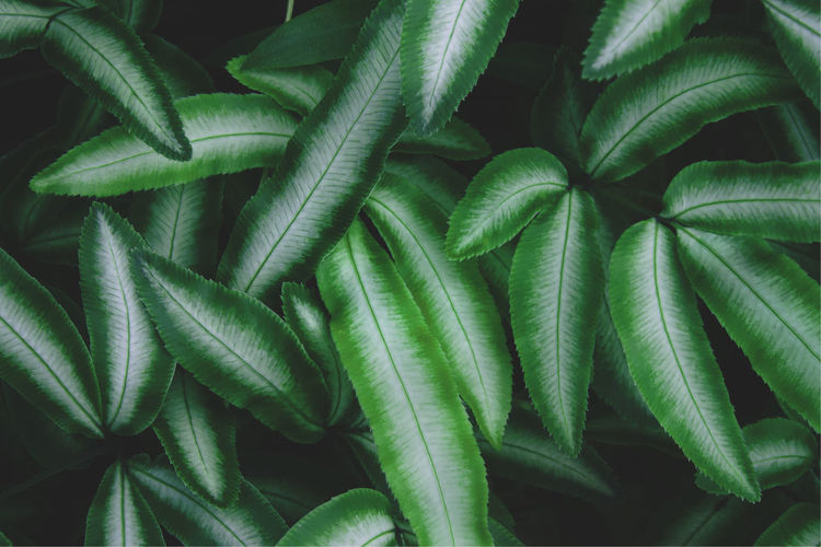 Exotic tropical fern foliage leaf in dark tone color natural pattern background