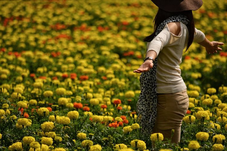 Rear view of woman standing amidst marigold flowers growing on field