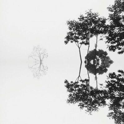 Delirium . . . . . VSCO Vscocam Tree TRENDING  Explore Minimal Minimalism Minimalart Minimal_shots Layout