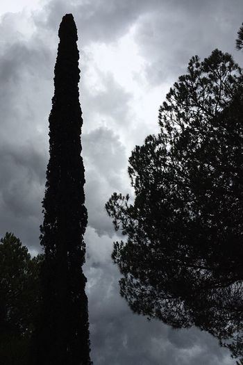 Ten Tree Sky