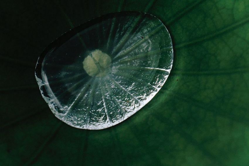 Drop Water Leaf
