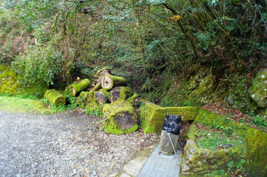 恩愛農場 臺灣 Taiwan Green Color Growth No People Outdoors Plant Day Tree Nature Close-up