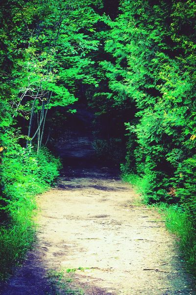 Wooded path Forest Nature Tree The Way Forward Green Growth Lush Foliage Outdoors Green Color Wilderness No People Tranquility Beauty In Nature Plant Scenics Day