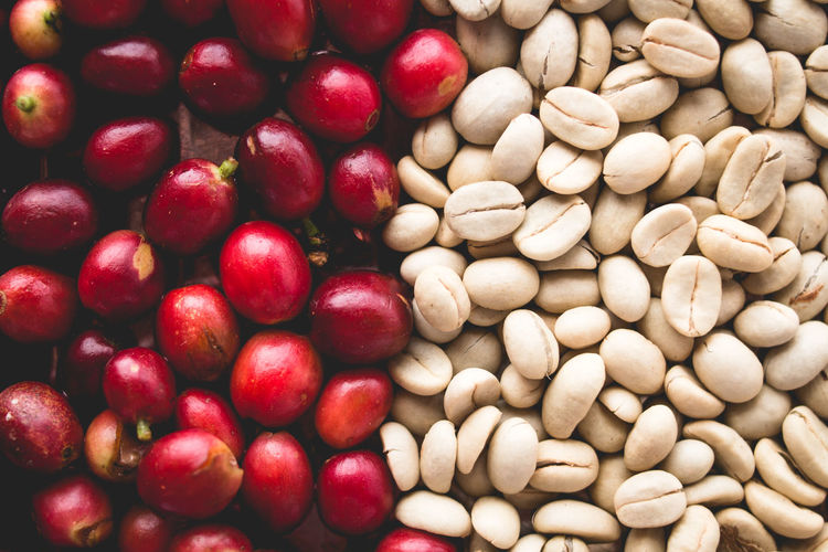 Arabica coffee Steps Coffee Beans Coffee in Asia Abundance Backgrounds Close-up Day Food Food And Drink Freshness Fruit Full Frame Healthy Eating Indoors  Large Group Of Objects Nature No People